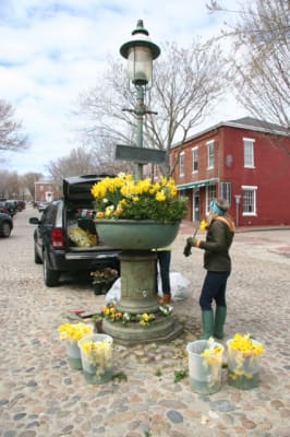 Daffodil-Prepping-Fountain-w426.jpg