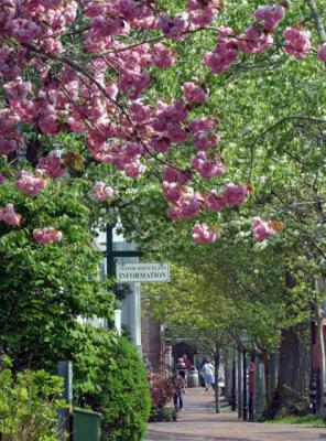 Federal-Street-Spring(1).jpg