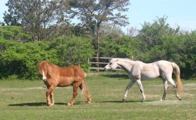 Madaket-Horses.jpg