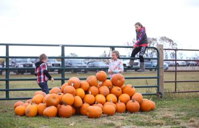 pumpkin-3285-w1900.jpg