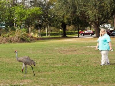 Cranes-Debbie.JPG