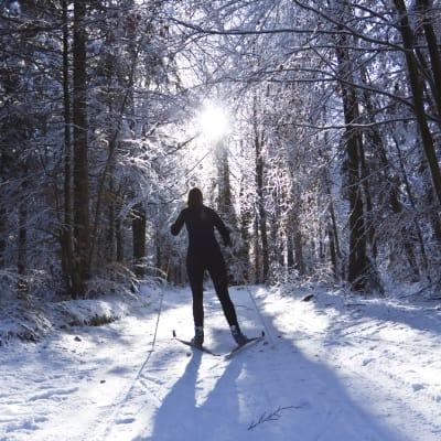 nordic-skiing-000011868346_Medium.jpg