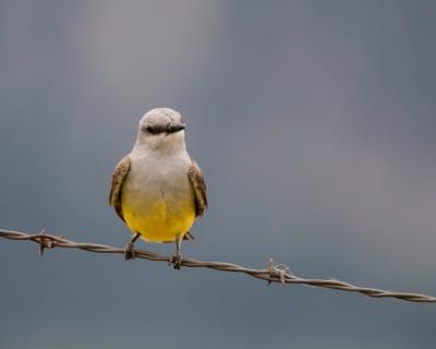 6-19-16-B-Bird-posing.jpg