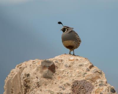 6-19-16-C-Bird-posing.jpg