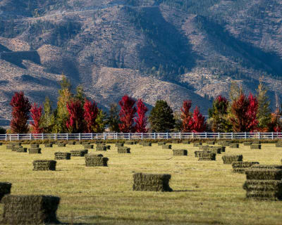 9-30-17-Fall-Hay-Field---Gardnerville-NV.jpg