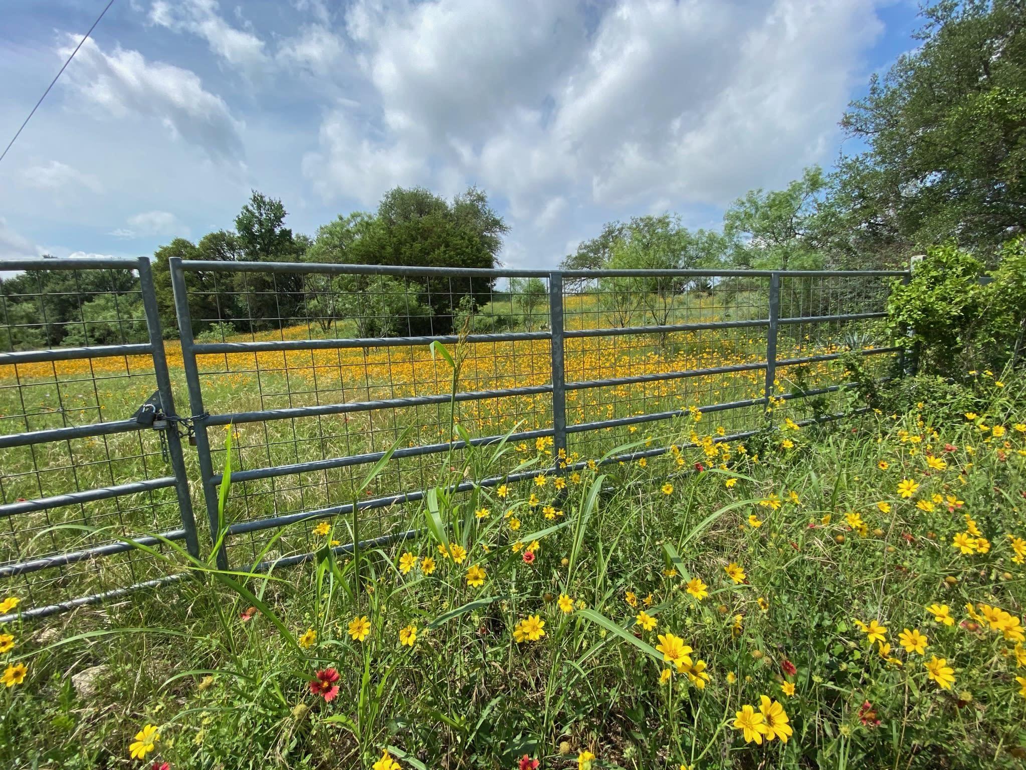 yellow wild flower pasture