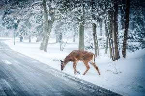 Deer-Vehicle Collision Likelihood Down in Ohio