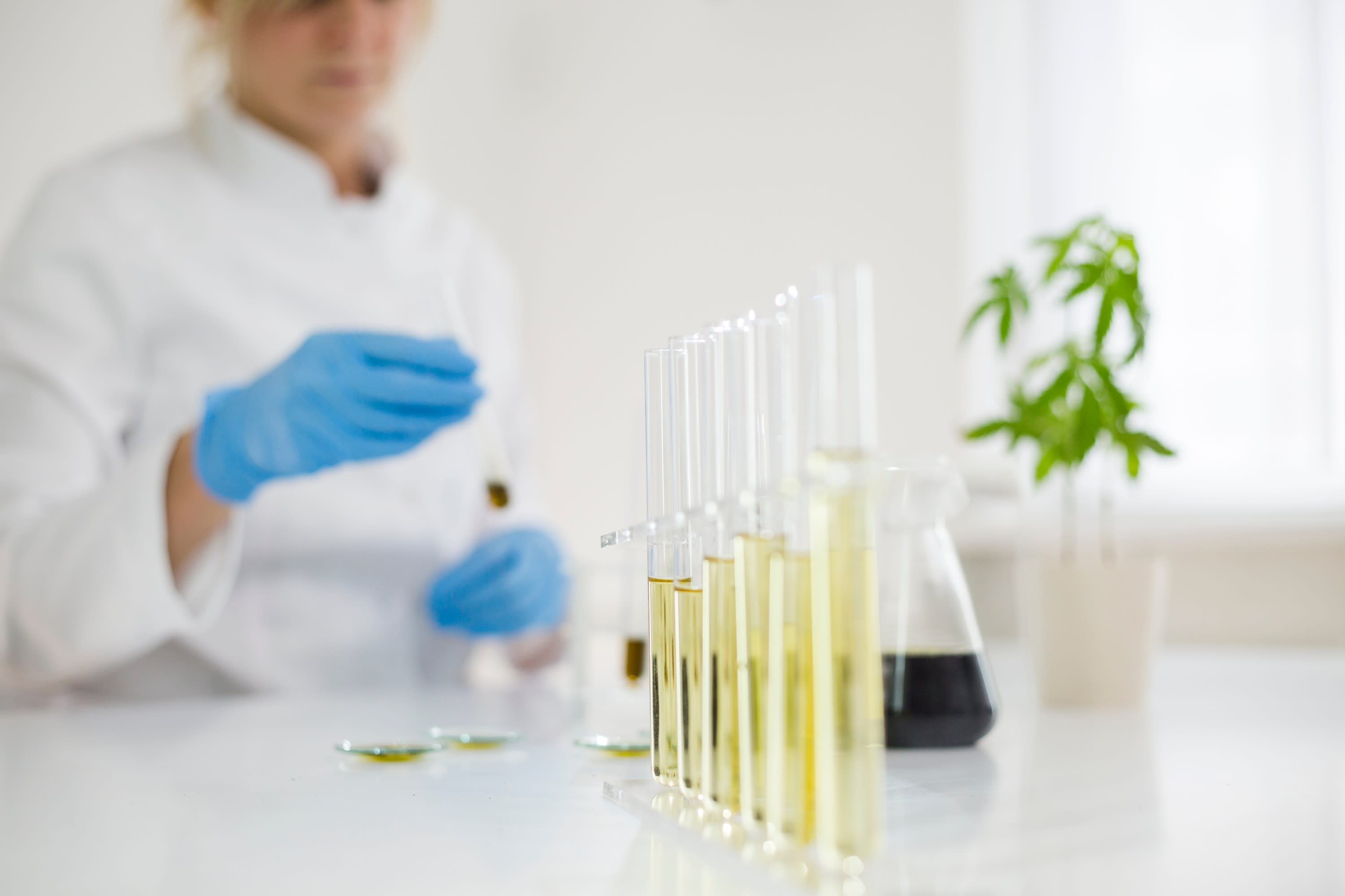 Cannabis Testing Lab