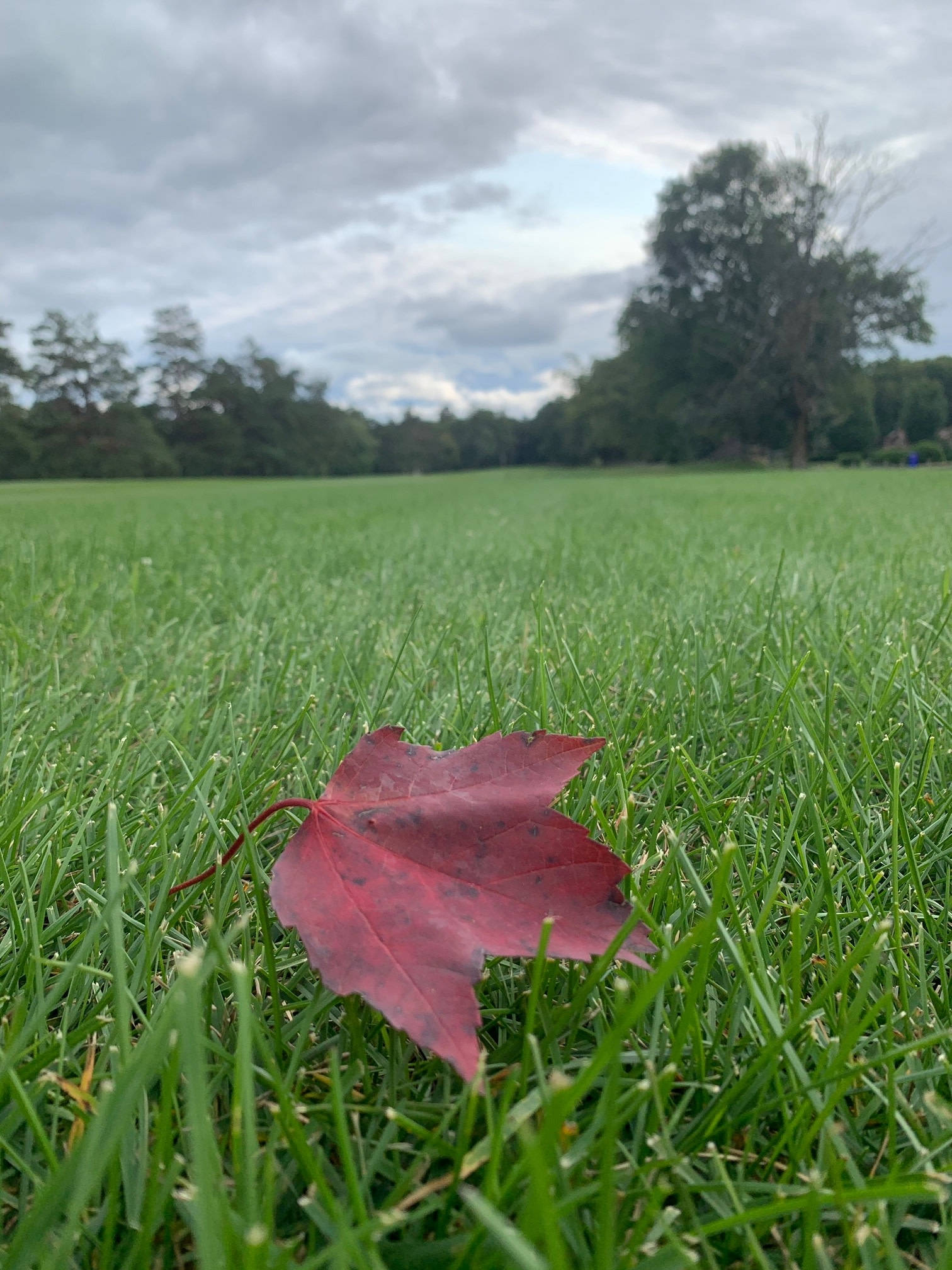 leaf at golf course