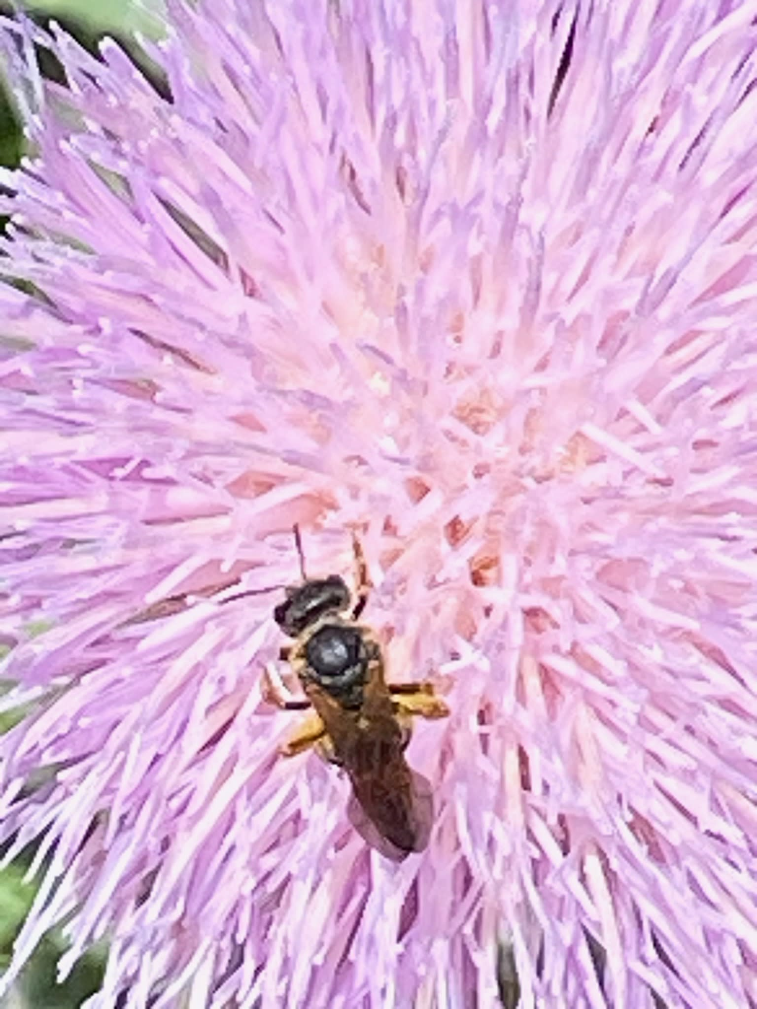 wasp on pink flower