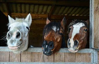 BEMER Horses