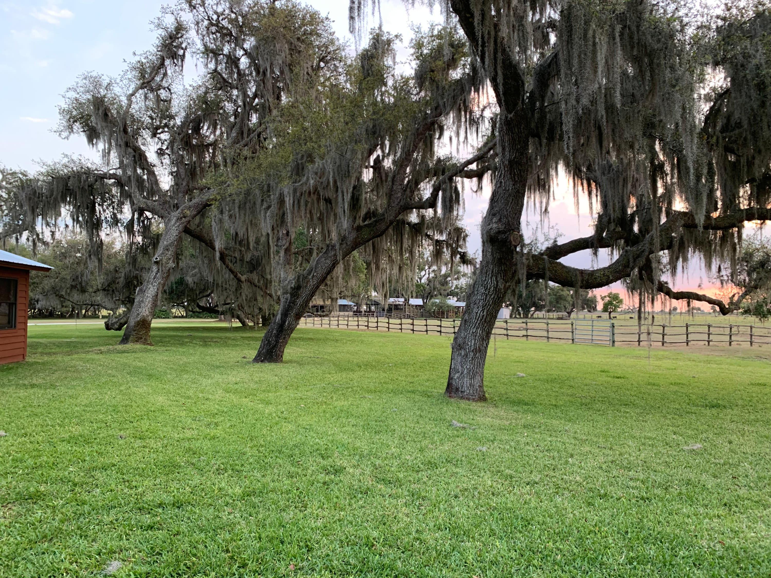 granddaddy oaks