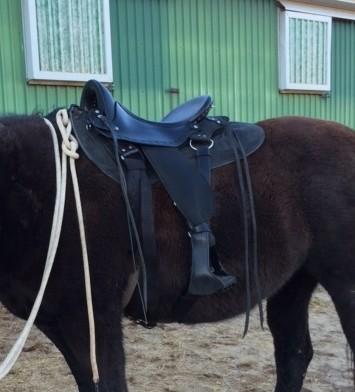 Carry Me Saddle