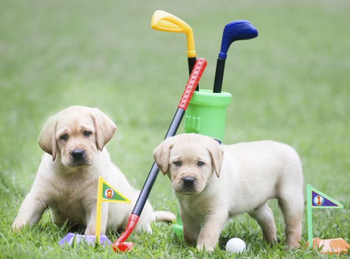 Putt for Pups