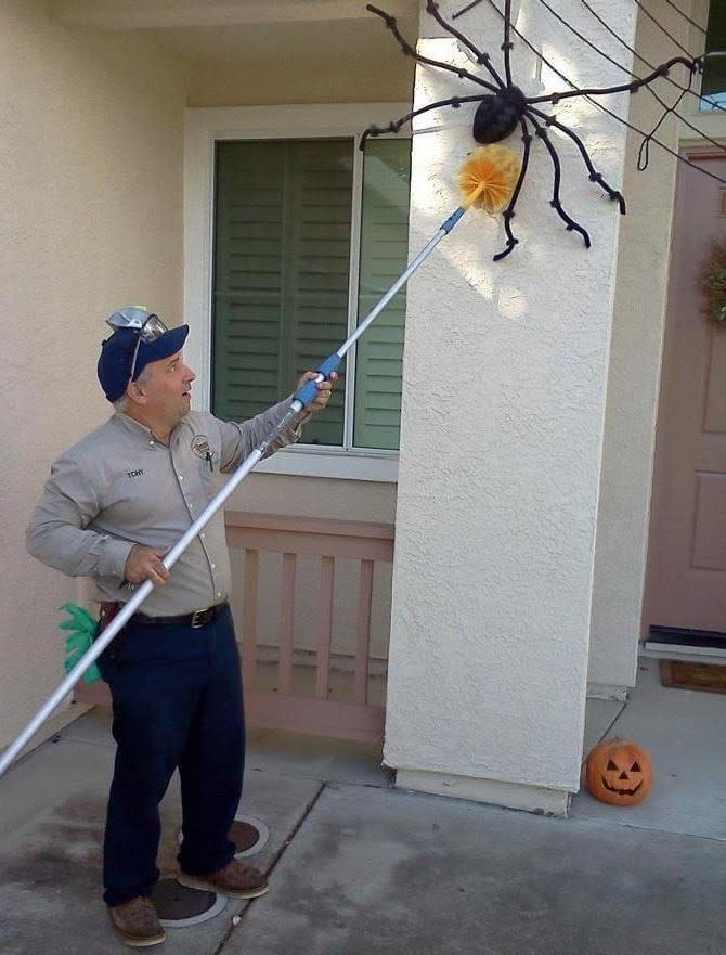 Photo of Tony Azevedo catching a large spider on Halloween