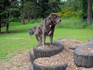 Sutherlin Dog Park