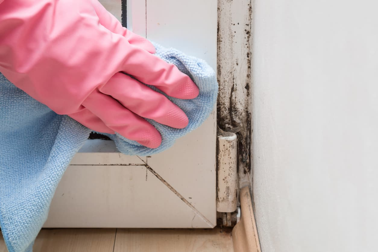 Cleaning mold in home