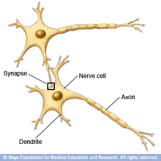 Illustration of how nerve cells connect