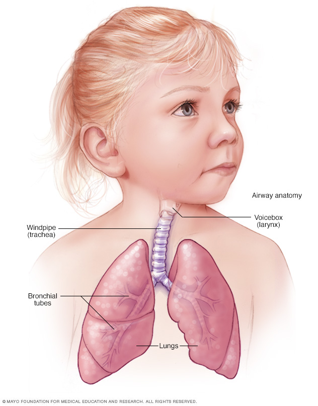A normal airway in a child
