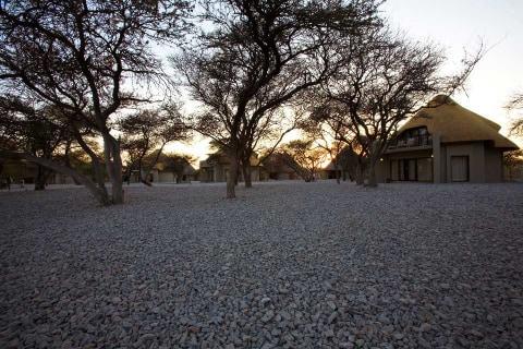 Etosha Nashorn