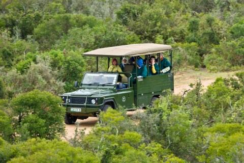 Addo Elephant Park Game Drives