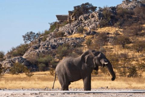 Etosha Oryx Herde