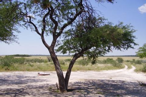 gefuerte Namibia botswana tour (38 von 68).jpg