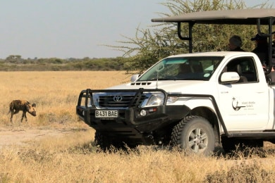 Day Trips to Moremi Game Reserve
