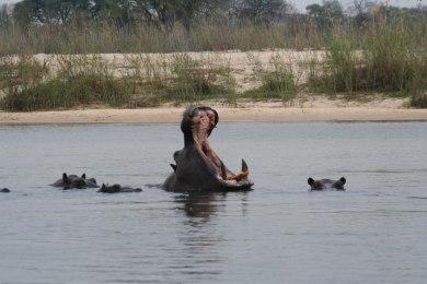 Ndhovu Safari Lodge - Wildlife
