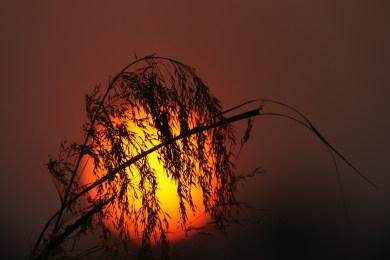 Ndhovu Safari Lodge - Sunset