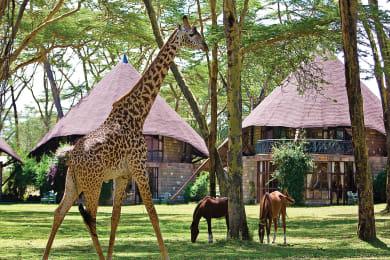 Giraffe in the Gardens