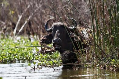 Wildlife in the lake