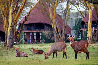 Wildlife in The Gardens