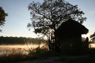 Tree house & mist