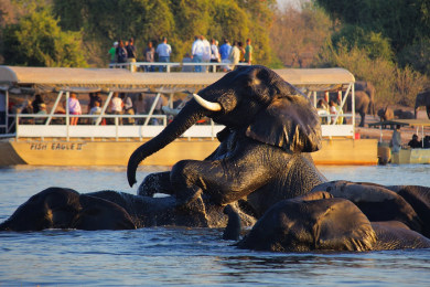 Boat Cruise on Chobe river