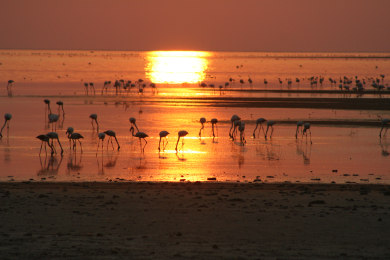 Flamingos at Makgadikgadi Salt Pans