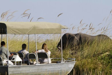 Motorboat trip in the heart of the Moremi Game Reserve
