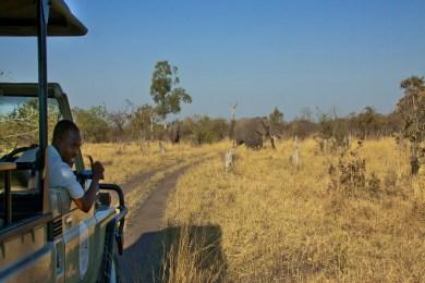 Daily game drives through the Chobe and Savuti