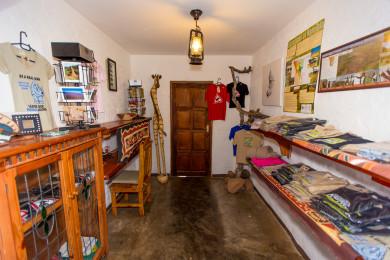 Curio Shop