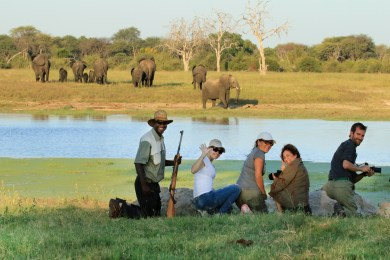 Fantastic game walks with experienced guides