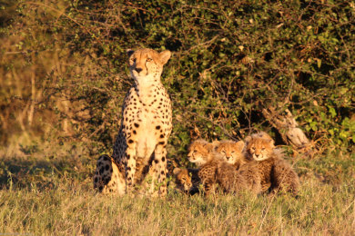 Queenie and her cubs!