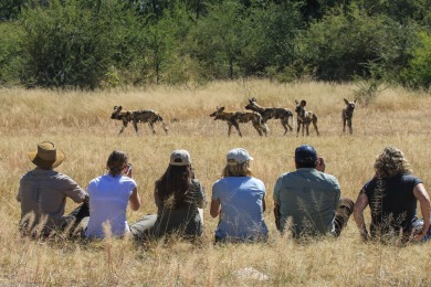 Walking with wild dogs