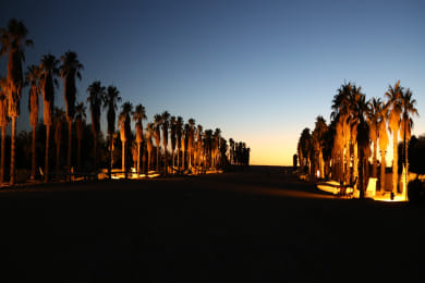 Palm Tree Alley- Sunset