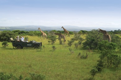 Kariega safari experience