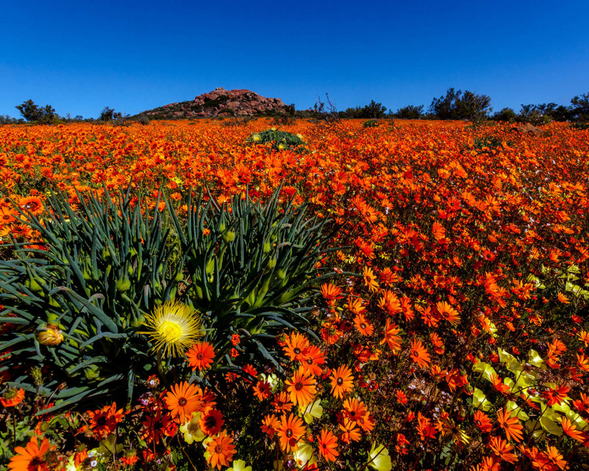 Namaqualand-2.jpg