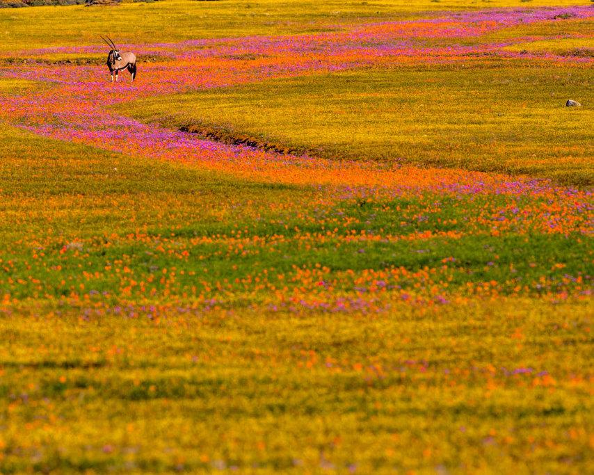 Namaqualand-5.jpg