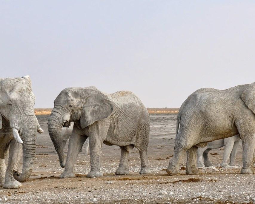 elephant-1170111_1920.jpg