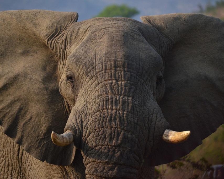 elephant-1860982_1920.jpg