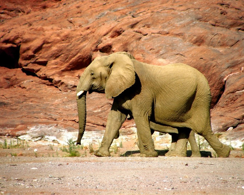 elephant-218916_1280.jpg