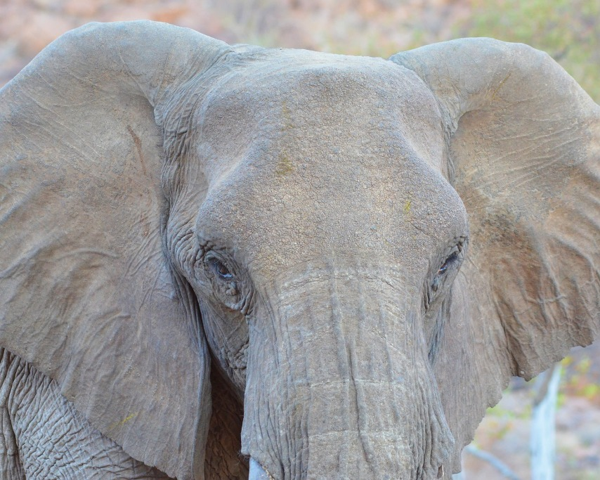 elephant-2451782_1920.jpg